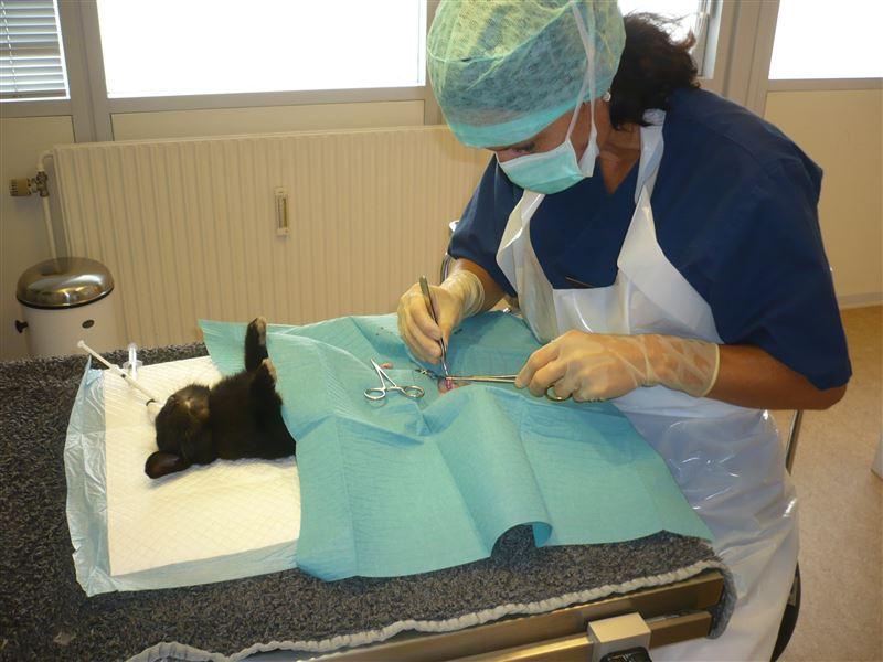 kanin dyrlæge